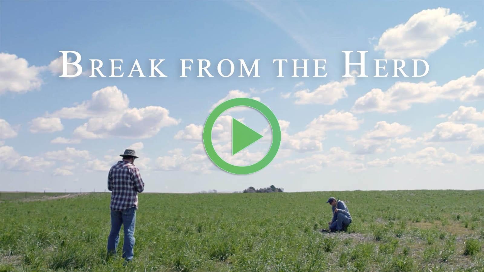 Break from the Herd - Monica Murray, Wilsonville OR